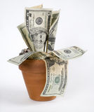 Growing Money Stock Images