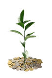 Growing money concept Royalty Free Stock Photos