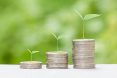 Growing money concept. Royalty Free Stock Images