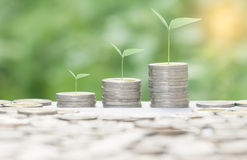 Growing money concept. Royalty Free Stock Photo