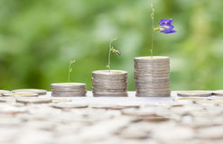 Growing money concept with stack coin and flower Royalty Free Stock Photos