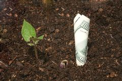Growing Money (High Resolution File). Three plants growing Stock Photos