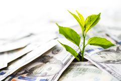 Growing Money and investments. Tree plant growth from American Banknote dollars. saving money concept royalty free stock photo