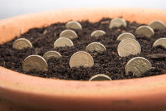 Growing money in pot. Growing coins and notes in pot stock images