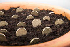 Growing money in pot. Growing coins and notes in pot stock photo