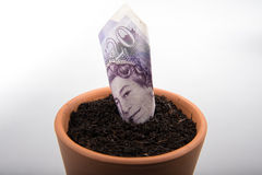 Growing money in pot Royalty Free Stock Photos