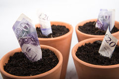 Growing money in pot. Growing coins and notes in pot royalty free stock photos