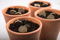 Growing money in pot Stock Image