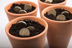 Growing money in pot Stock Photo