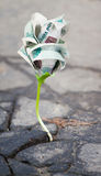 Growing  money sprout in asphalt Royalty Free Stock Images
