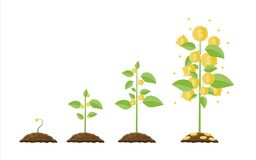 Growing money tree. Stages of growing. Gold coins on branches. Symbol of wealth. Business success. Flat style vector illustration Royalty Free Stock Photo