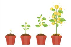 Free Growing Money Tree. Stages Of Growing. Stock Photo - 108425880