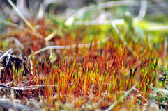 Growing moss Stock Photo