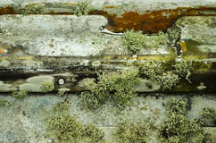 Growing Moss and Algae on a Boat.  Royalty Free Stock Images