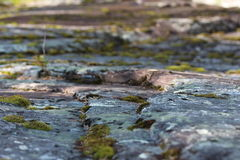 Growing moss between stepping stones. Royalty Free Stock Image