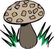 Growing Mushroom Stock Photo