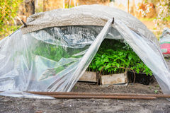 Growing new pepper and tomato seedlings in hotbed Royalty Free Stock Photos