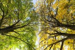autumn colors tree stock photo