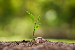 Growing and nurturing young plant seedling Royalty Free Stock Photo
