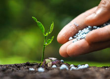Growing and nurturing young plant seedling. Hand giving chemical fertilizer to plant on soil Stock Photos