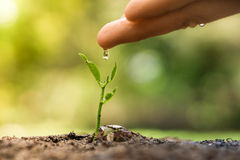Growing and nurturing young plant seedling Royalty Free Stock Image