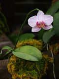 Growing orchid Stock Photos