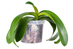 Growing orchid plant Stock Photos