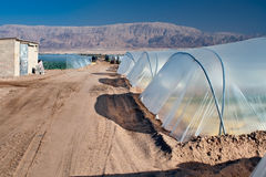 Greenhouses in the Dead Sea. Stock Image