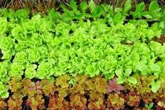 Growing Organic vegetable farms Royalty Free Stock Photos