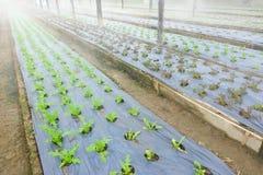 Growing Organic vegetable farms Stock Photography