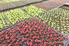 Growing Organic vegetable farms Stock Photos