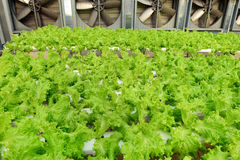Growing Organic vegetable farms Royalty Free Stock Images