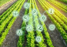 Growing organic vegetables with new technologies. Development of innovation and research. Investing in farming. Study quality of. Soil and crop. Selection of royalty free stock image