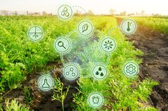 Growing organic vegetables with new technologies. Development of innovation and research. Investing in farming. Study quality of. Soil and crop. Selection of stock images