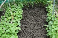 Growing organic vegetables. Royalty Free Stock Photos