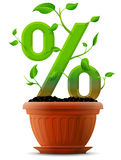 Growing percentage symbol as plant with leaves in flower pot Stock Photo