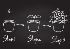 Growing phases of potted plant royalty free illustration