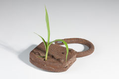 Growing plant. A plant is growing out of a lock stock photography
