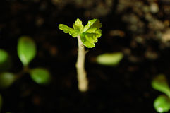 Growing plant royalty free stock photography