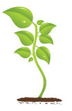 Growing plant Stock Photography