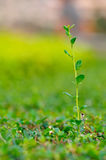 Growing Plant Royalty Free Stock Photos