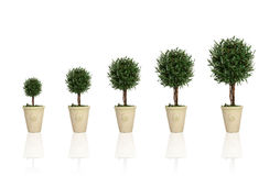 Free Growing Plant Stock Photo - 2065160