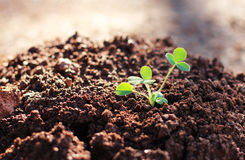 Growing plant Royalty Free Stock Photo