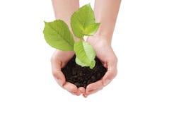 Growing plant Stock Photos