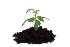 Growing Plant Stock Images