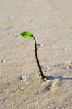 Growing plant bud at beach alone Stock Photo