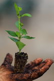 Growing Plant. A close up view of someone growing a plant in their hand Stock Photography