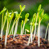 Growing plant Stock Image