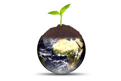 Growing plant on earth Royalty Free Stock Photo