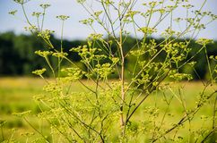 A growing plant in the field. The growing plant in the field close-up Stock Photos